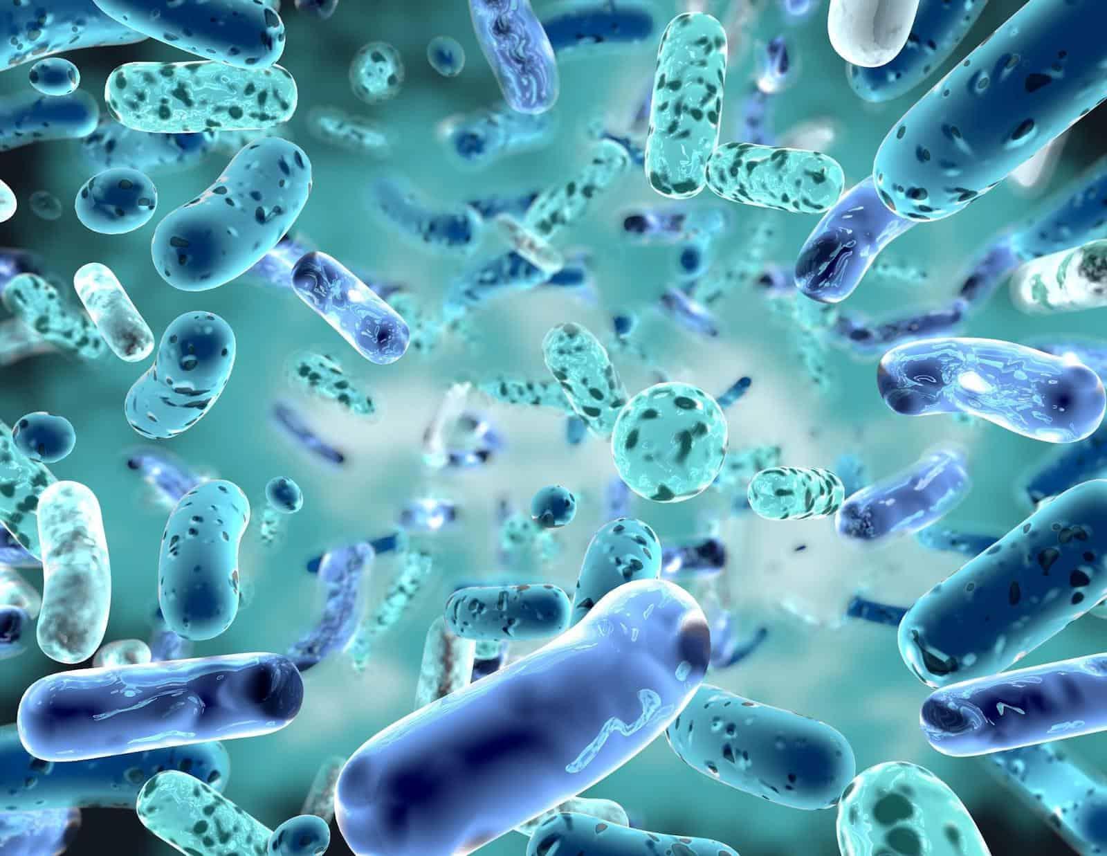 SIBO probiotics: SIBO bacteria