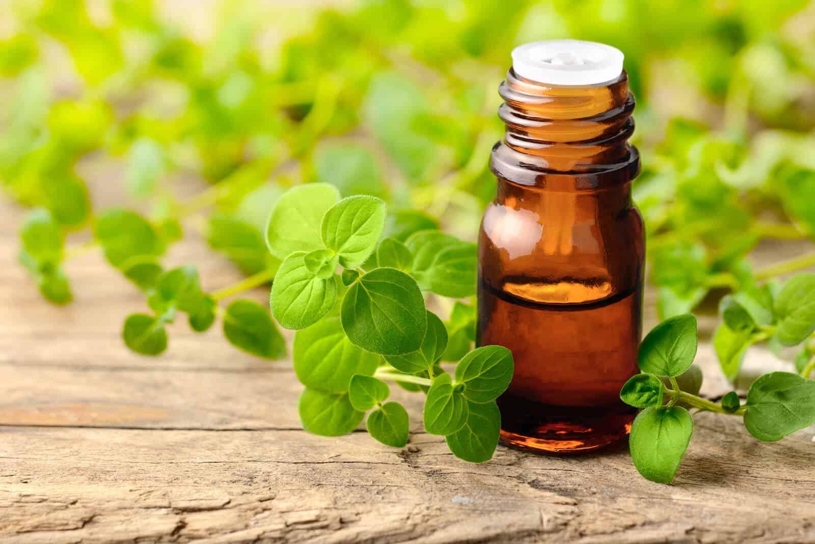 oil of oregano benefits: oregano oil and leaves